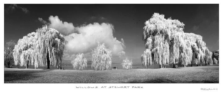 Willows at Stewart Park
